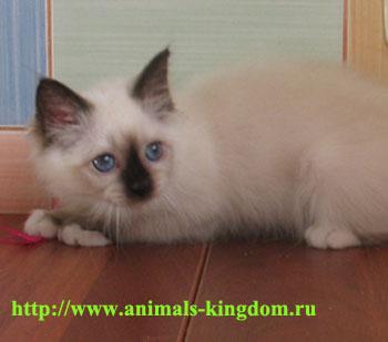 """Питомник """"Animals Kingdom"""", собаки и кошки"""