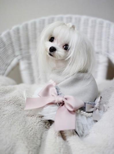 """Интернет-магазин """"Puppy Glamour"""", эксклюзивная одежда для маленьких собак"""