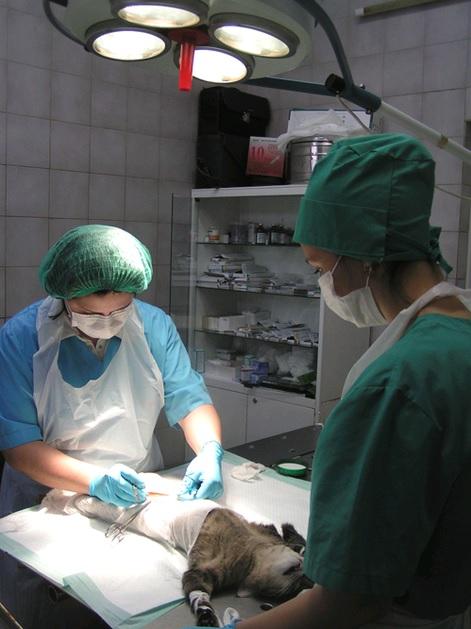 """Сеть Ветеринарных клиник """"Близнецы"""" - полный спектр услуг, приём узких специалистов"""