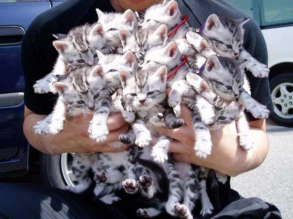 Домашняя передержка кошек