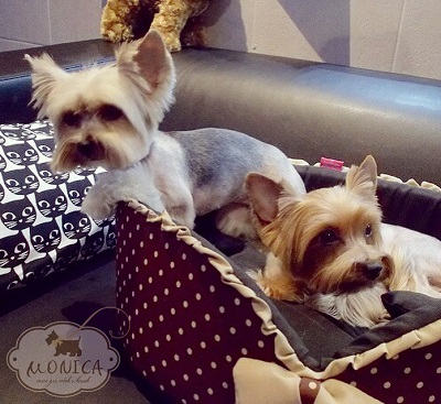Стрижка собак и кошек на Кутузовском - груминг салон Моника
