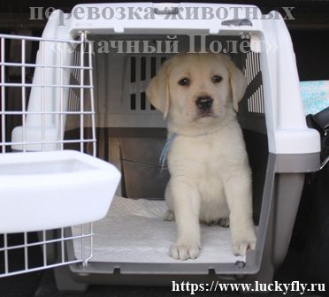 Перевозка домашних животных по России и за рубеж