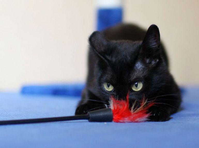 Чёрный кот по имени Чарли