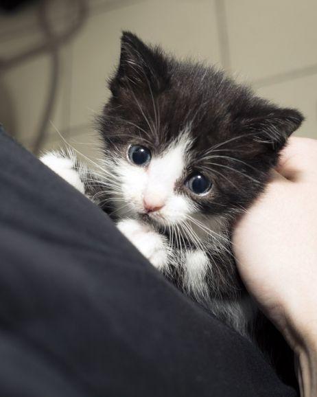 Котёнок с сапфировыми глазами ищет дом