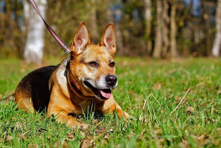 Собака Муха ищет дом