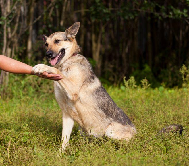 В дар яркая и эффектная собака Лайма, в добрые руки