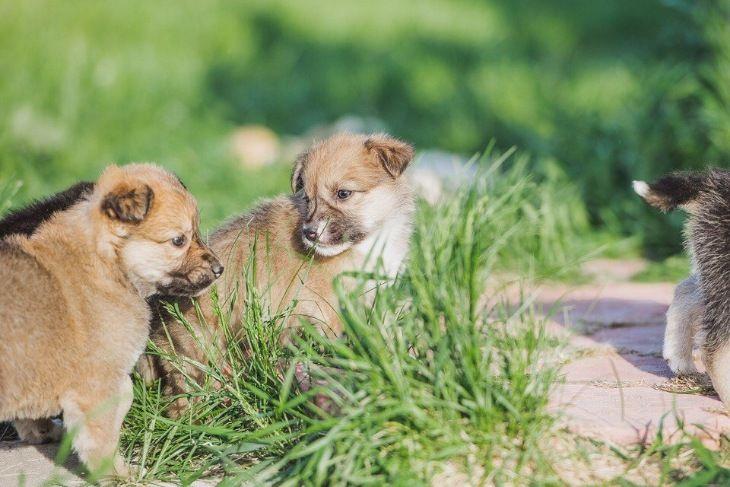 Трое очаровательных щенков ищут дом