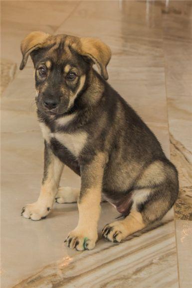 Чудесный щенок Адель в добрые руки