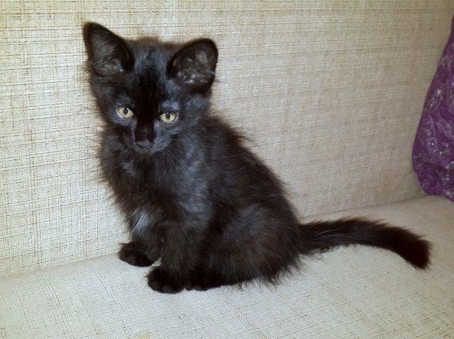 Чёрный котёнок Тилли в поисках дома