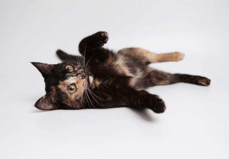 Отдам подрощенного котёнка