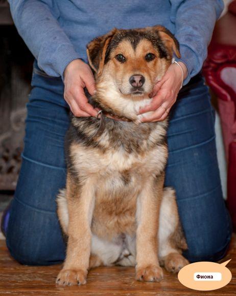 Отдам собаку Фиону, собака в дар, собака в добрые руки