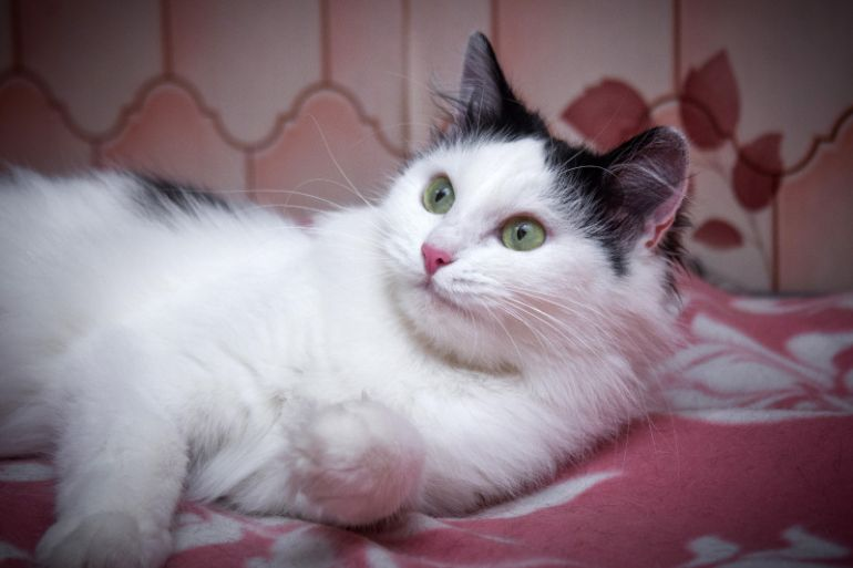 Обворожительная Мишель, зеленоглазая кошечка  в дар