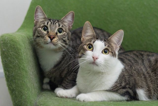 Тиграшик и Лолка ищут один дом на двоих