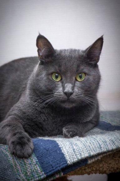 Брутальный кот Серж ищет дом