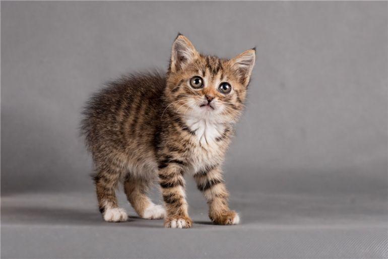 Котёнок Бонни ищет дом