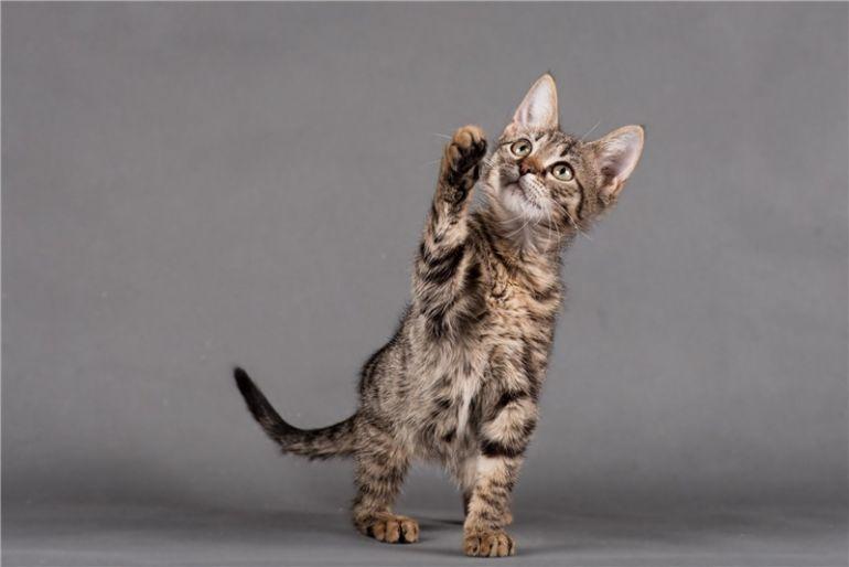 Котёнок Славик ищет дом