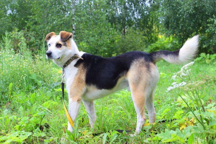Босс-классный пёс ищет дом