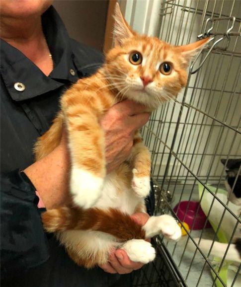 Ищет дом чудесный котёнок Рыжик