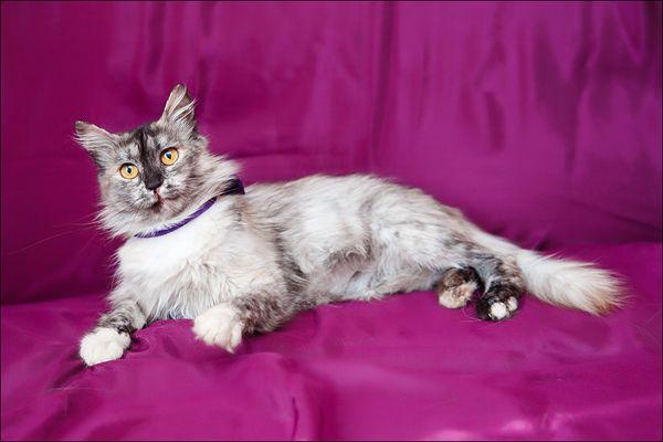 Ласковое чудо по имени Мира, кошка в добрые руки