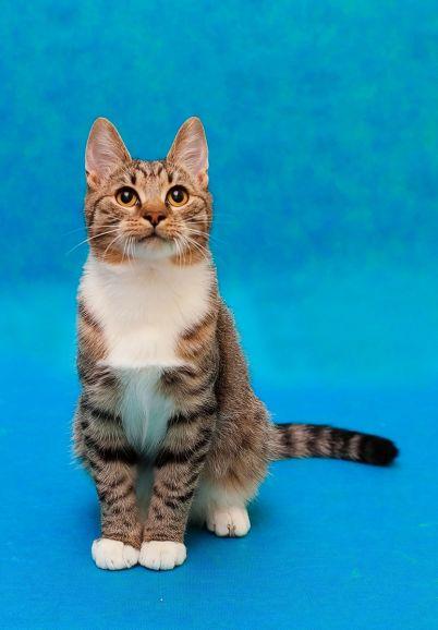 Молодой котик Гаврюша