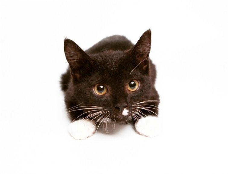 Ищет дом котёнок Бакстер