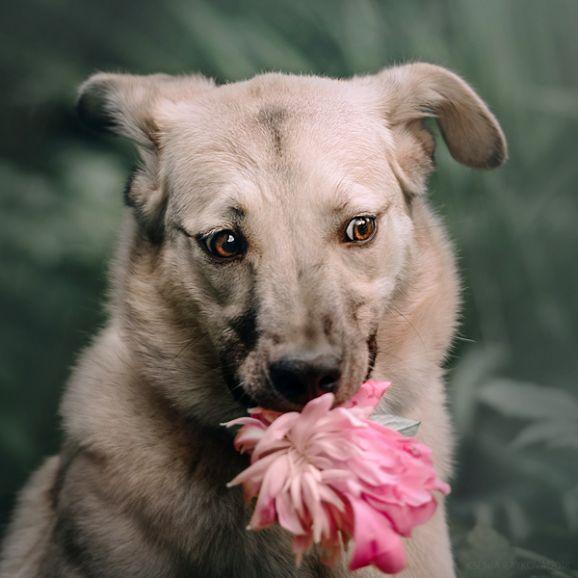 Умница Нюша - яркая зажигалочка Эйнштейн в собачьем обличье