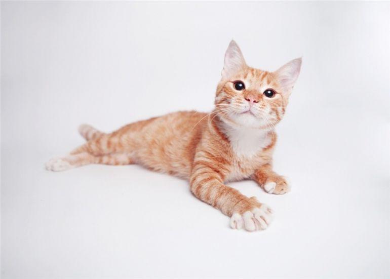 Рыжий котёнок Гипноз ищет дом