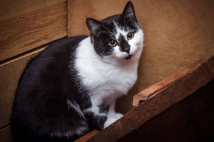 Кошки из приюта ищут дом