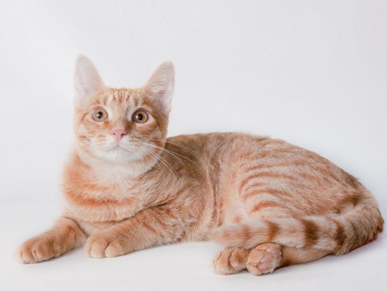 Котята - рыжий мальчик и полосатая девочка