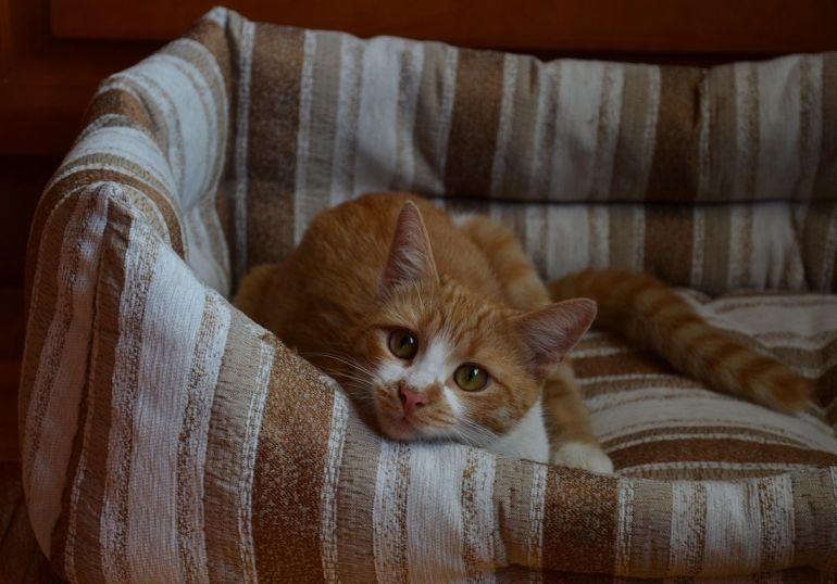 Ищу любящий дом и надежного хозяина молоденькой кошечке Зорьке, 8 месяцев