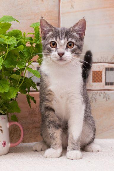 Котенок Фифочка в добрые руки, 4 месяца