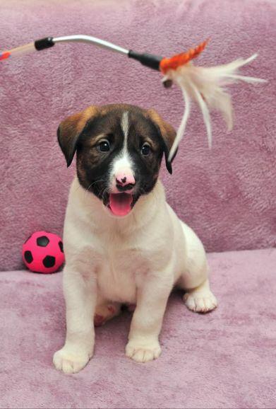 Очаровательные щенки - Микки и Дени, ищут добрых хозяев