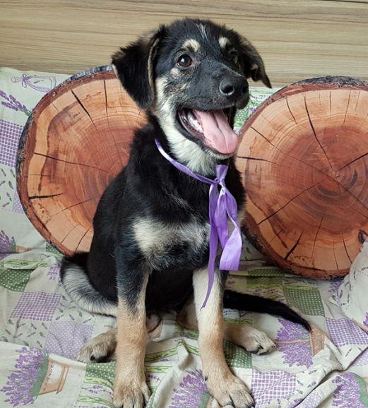 В добрые руки 3 месячный щенок - обаятельнейшая Тина