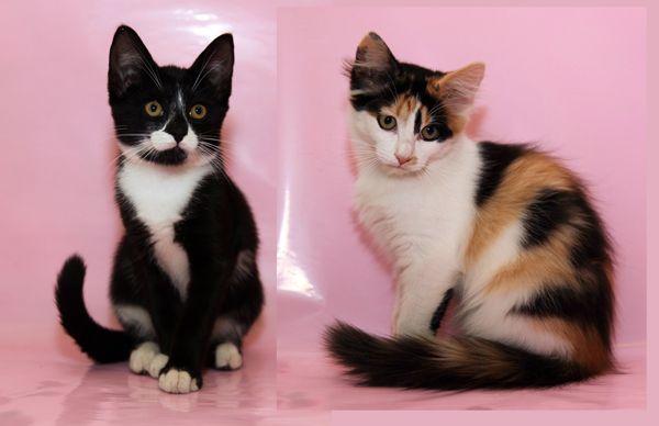 Супер ласковые котята Кеша и Стеша в добрые руки