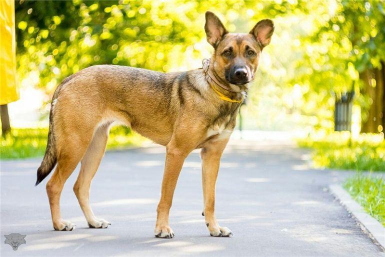 Очаровательная собачка Масяня ищет дом