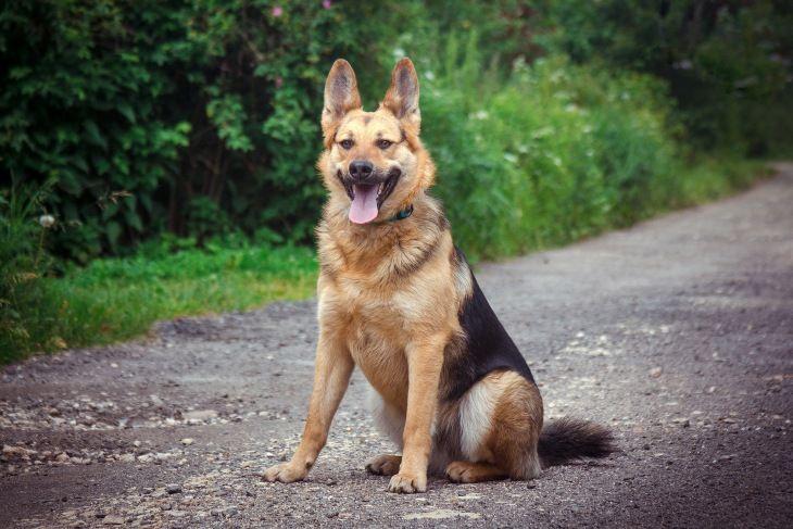 Молодой пес в добрые руки