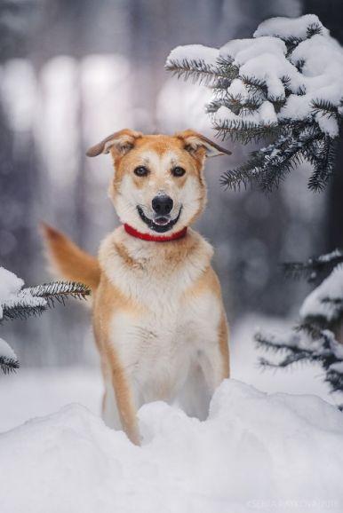 Красивая собака в добрые руки