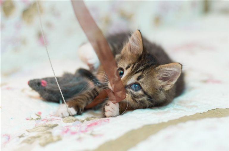 Особенный котёнок Кеша ищет семью