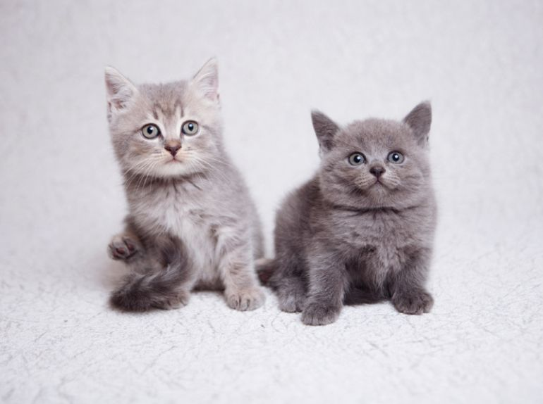 Плюшевые котята в добрые руки