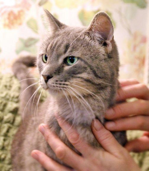 Миротворец котик Паштет в добрые руки