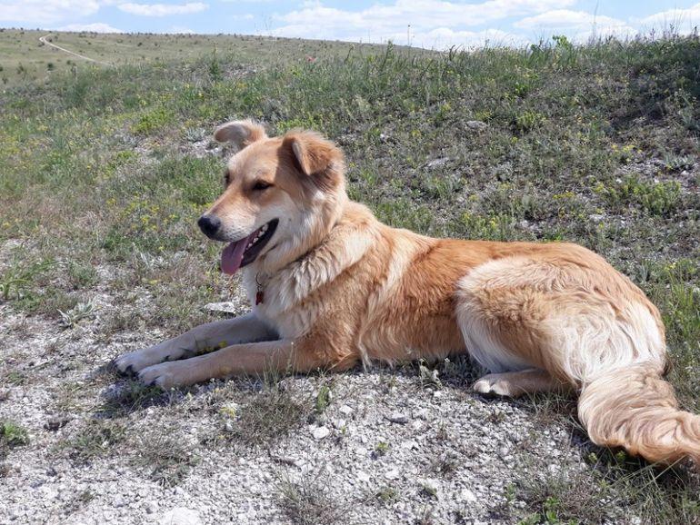 Ищет дом собака-солнце Лиса