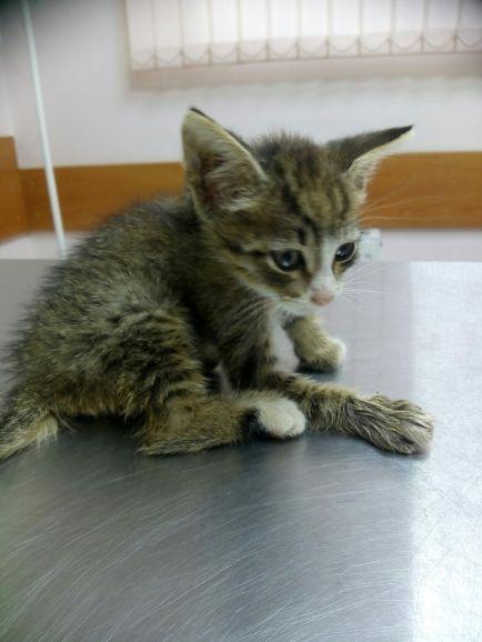 Котёнок Боня ищет  дом