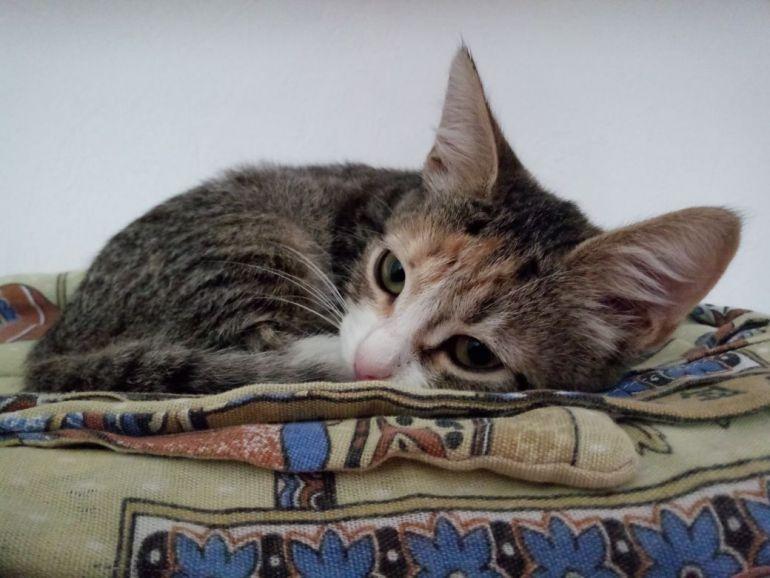 Ищем дом для двух котят