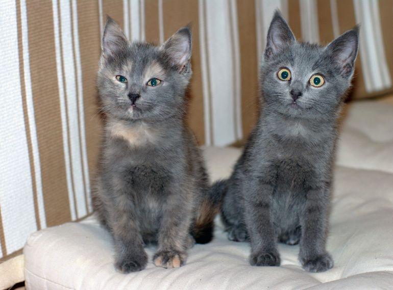 Квартет волшебных серебристых котяток в поисках дома