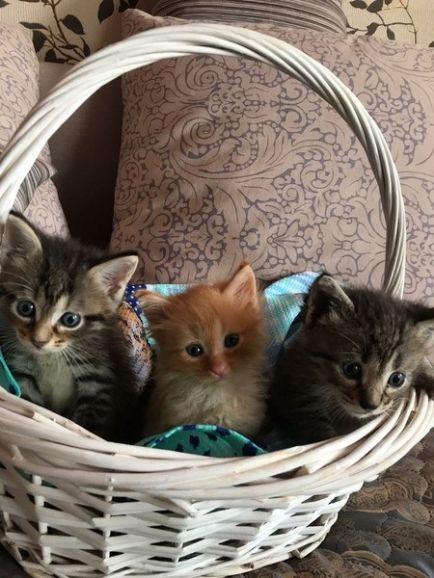 Очаровательные малыши 1 месяца ищут дом