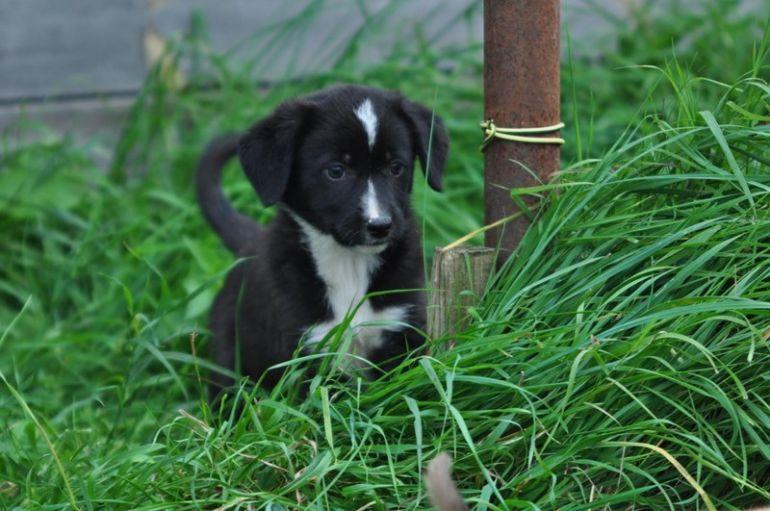 Классные щеночки-счастливчики ищут дом