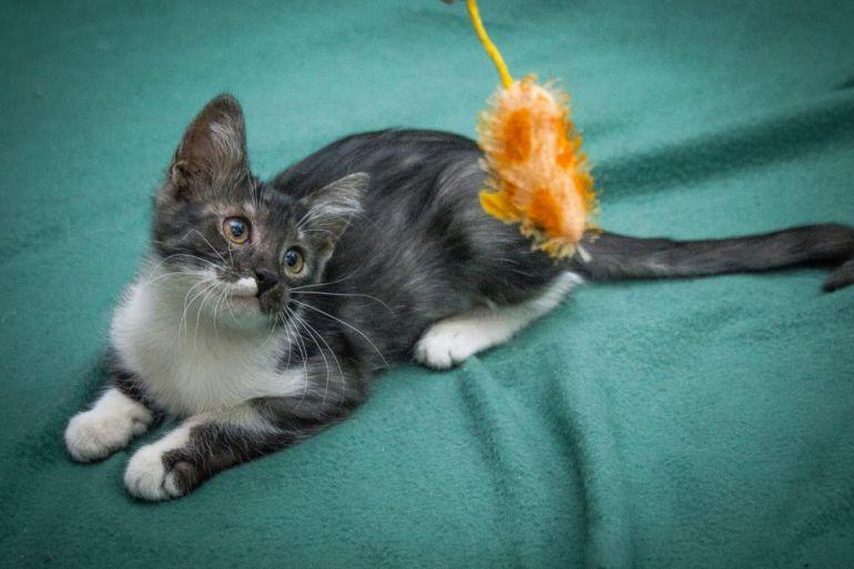 Кошка Мышка ищет дом, в дар