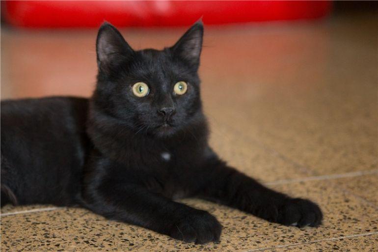 Роскошный котик Кузя ищет дом