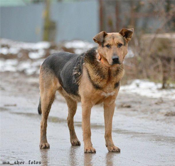 Чудесный пёс Бутч ищет дом
