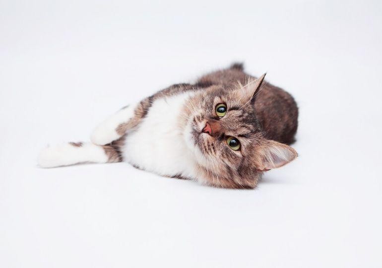 Кошечка Тося